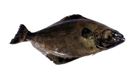 Photo: www.seafood.no