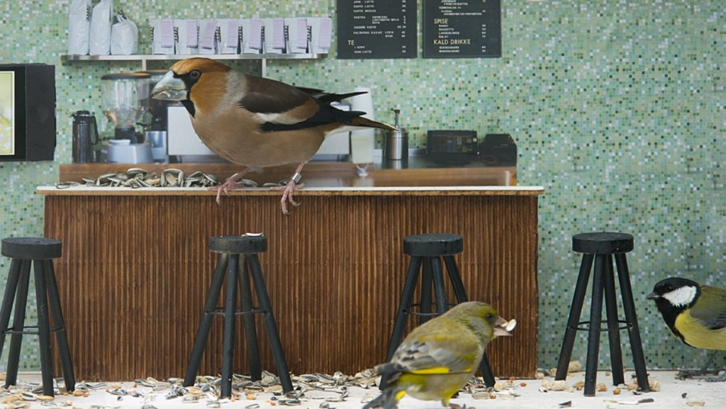 Photo courtesy of NRK.no Birds hang out at this bird feeder modeled after a hip Oslo cafe.