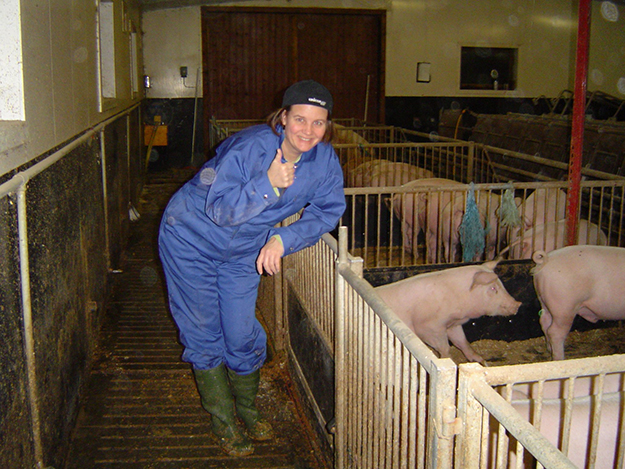 Heidi Pig photo