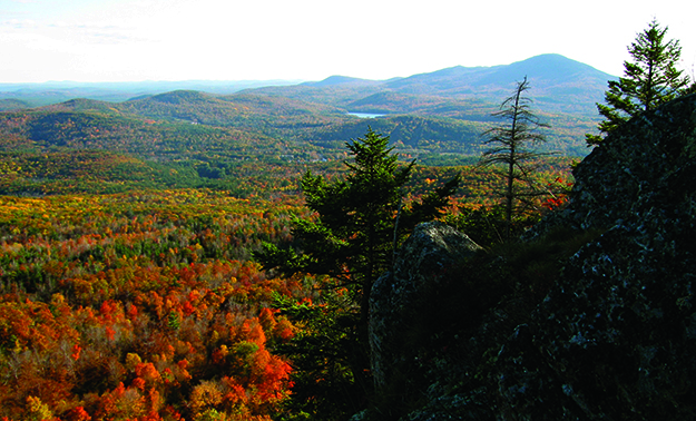 Photo: Tommorgan555 /  Wikimedia Commons If you're lucky enough to snag a hunting permit in New Hampshire, you'll almost certainly go home with a moose. And even if you don't, the fall foliage is sure to delight.