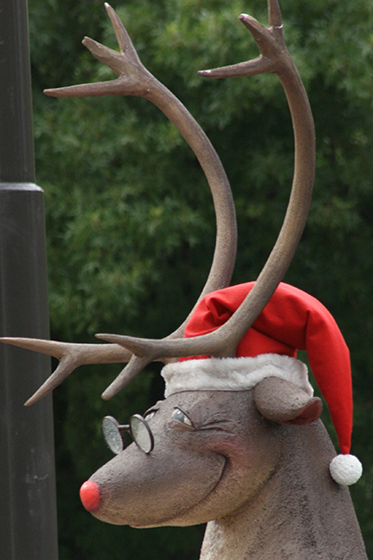 Photo: Anthony Cramp One imagines a bespectacled reindeer would know a thing or two about rain.
