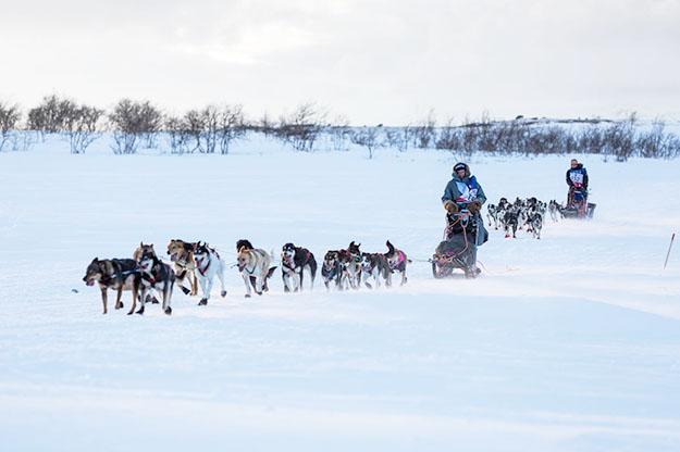 Photo: Finnmarkslopet.no Dag Broch and Marcal Rocias Palau with their teams.
