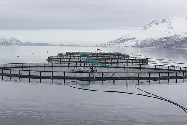 Photo: Thomas Bjørkan / Wikimedia Commons  Fish cages in Velfjorden, Brønnøy, Norway.