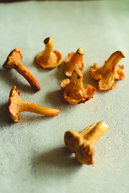 Photo: Daytona Strong Chanterelle mushrooms grow wild in many parts of the U.S. and Norway, but be careful if harvesting your own, as similar-looking mushrooms can cause gastrointestinal distress.