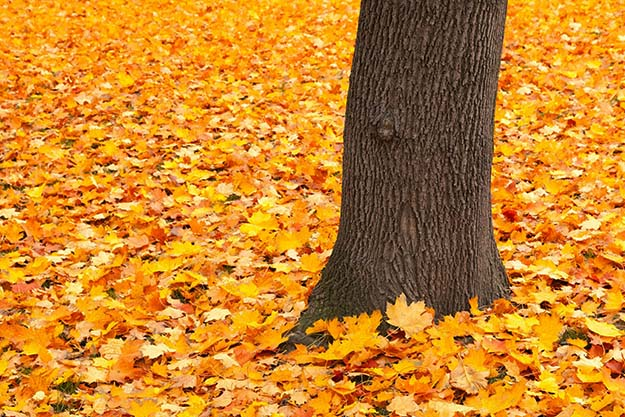 Photo: Pixabay The autumnal equinox marks the beginning of fall. Get ready for leaves!