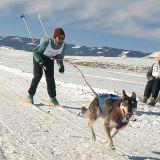 Photo: Jill Wilson Bob Wilson skijors with Jezebel at Granby, Colorado.