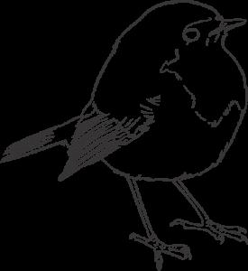 bird-1242376