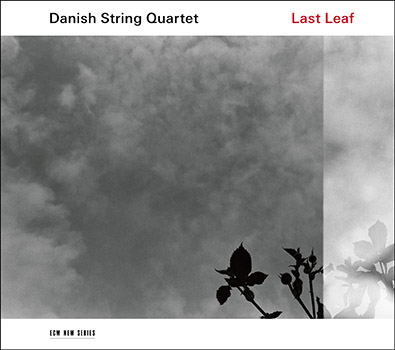 """Cover of """"Last Leaf"""" album."""