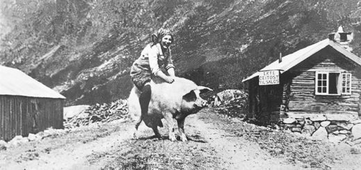 A popular Norwegian postcard depicting a woman sitting on top of a pig.