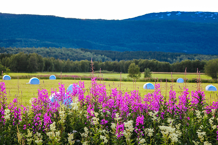 Colorful flowers in front of a field.
