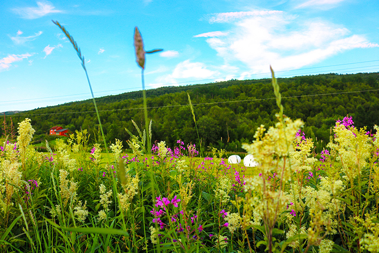 Colorful flowers in front of a hill.