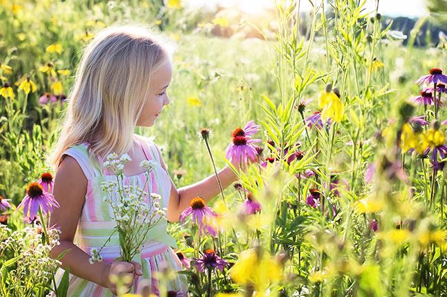 Norwegian spring flowers