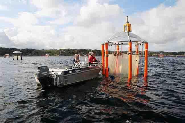 ocean acidity research