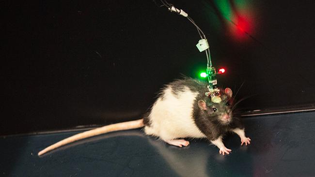 biological clocks experiment